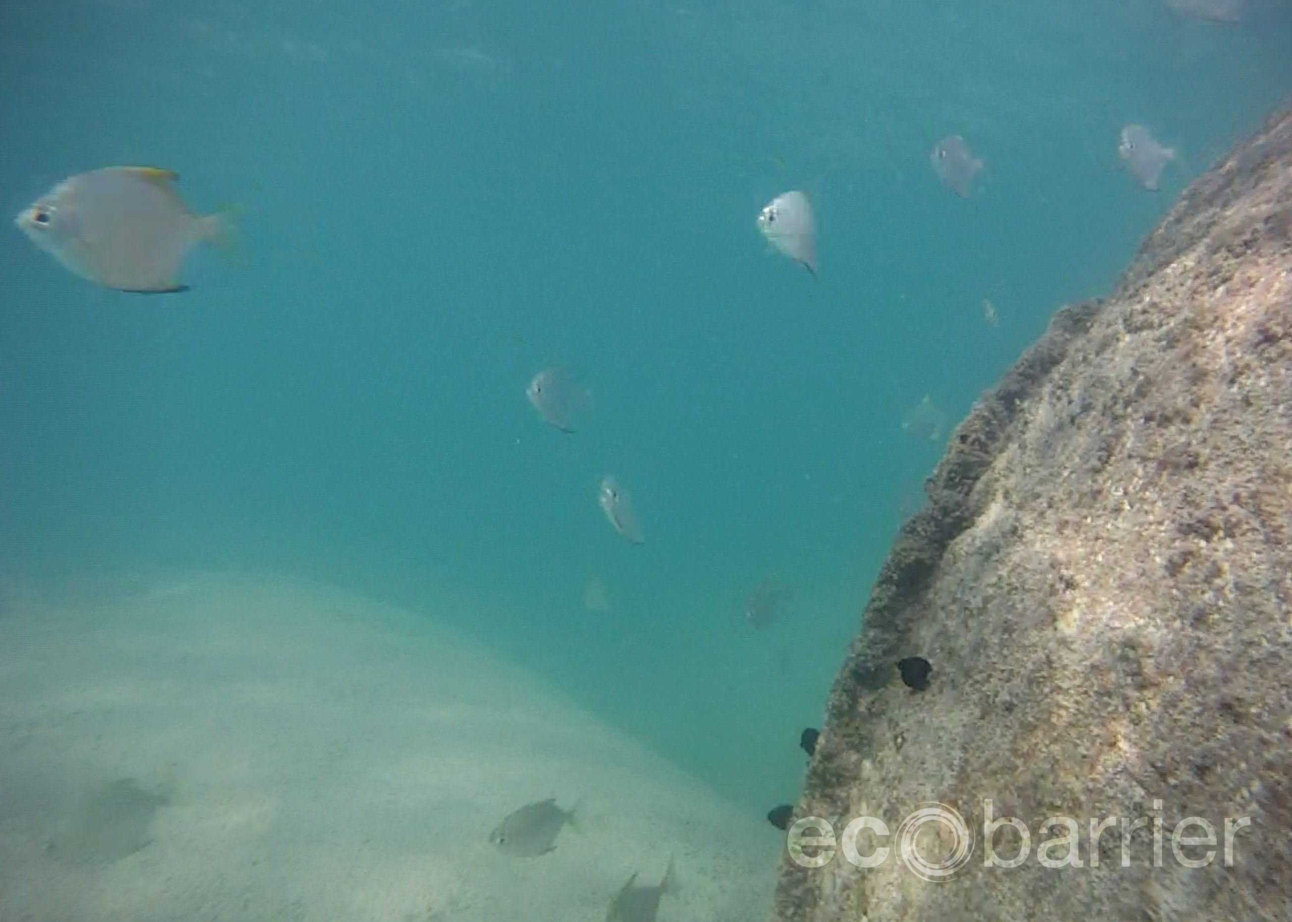 Ecotubes - Marine Life - A Bit of Local Sustainability