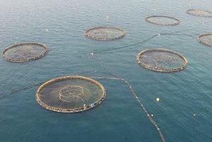 How aquaculture increases demand for sustainable solutions