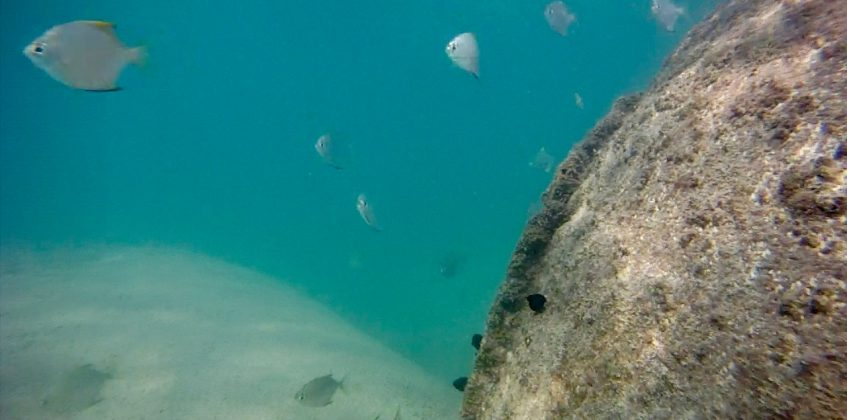 Life Below Water - Sustainability Bits