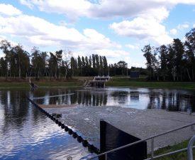 Water Weeds, Belgium, Bolina Booms